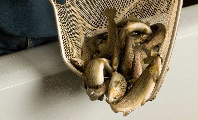 Johnsonburg Mill Fish Hatchery Stocks Local Rivers