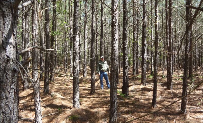 Partnership Leads to 500,000 FSC-Certified Acres