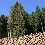 forest certification through AWA