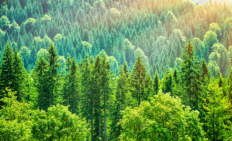 Kamloops Wood Waste